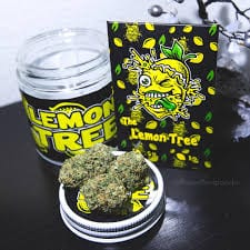 Lemon Tree Cali Tins