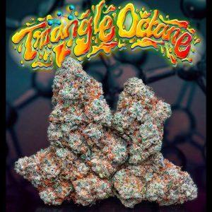 triangle octane jungleboy